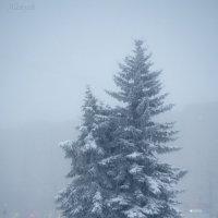 Ель сквозь ледяной туман. :: Алена Малыгина
