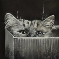 Я не кот в мешке... В коробке!  Озорник я! Не из робких! (Картина написана пастелью). :: Лара Гамильтон