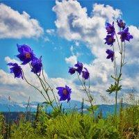 Цветы гор :: Сергей Чиняев
