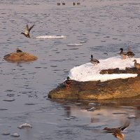 В Кольском заливе :: Владимир Стаценко
