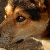 Год жёлтой собаки... :: Елена Михайлова .