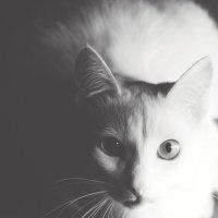ешкин кот) :: Виктория Большагина