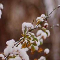 зимняя флора 2 :: Александр Прокудин