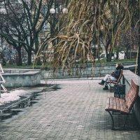 Про елки... :: Сергей Офицер