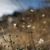 Горные травы :: Александр Дмитриев