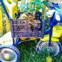 Даже котам приятно вспомнить детство! :: Александр Куканов (Лотошинский)