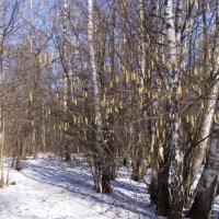 весна с зимой :: Анна Воробьева