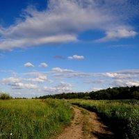 Летний пейзаж. :: Антонина Гугаева