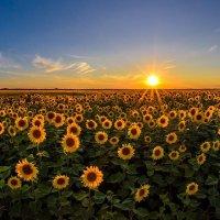 Лики солнца :: Сергей