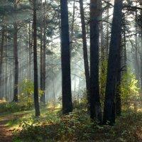Утро в осеннем лесу :: Александр Подгорный
