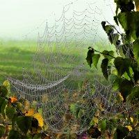 Утренняя паутина :: Сергей Чиняев
