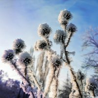 Про цветы ледяные.. :: Андрей Заломленков