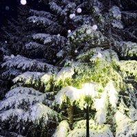 Ёлки и фонарь со снегопадом. :: Сергей Царёв