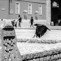 Полдень в старом городе :: Юрий Вайсенблюм
