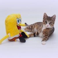 Спанч Боб & Герри :: Николай Агапитов