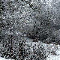 Симфония снегопада :: Любовь