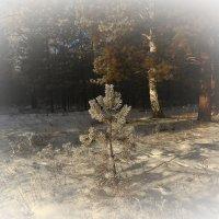 С Новым Годом, Друзья! Счастья, Здоровья и Любви! :: Сергей Жуков
