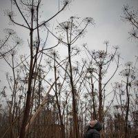 Когда деревья были большими... :: Ирина Ильиных