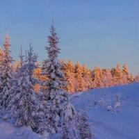 Зимний лес :: Владимир Волосовский