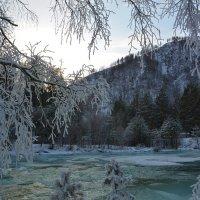 Украсил мороз ветки. :: Валерий Медведев
