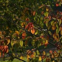 Осенняя зарисовка. :: Paparazzi