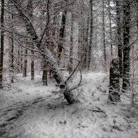 в зимнем лесу :: юрий иванов