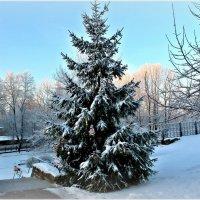 С Новым Годом, друзья! :: Marina Pavlova