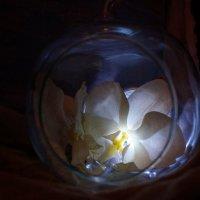 Новогодние мечты ... о весне :: Алёна Савина