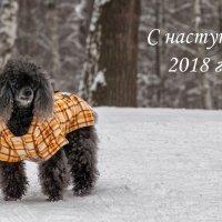 С Новым годом! :: Вячеслав Касаткин