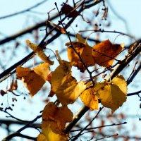 Осень :: Михаил Новиков