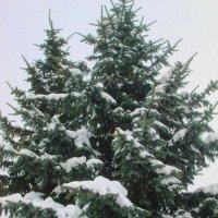 Символ новогодья :: Самохвалова Зинаида