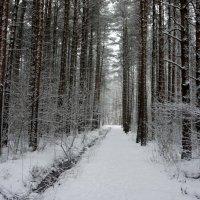 Прогулка в первый день 2018 года :: Елена Павлова (Смолова)