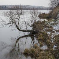 Зима в декабре :: Дмитрий Т