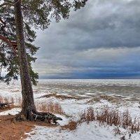 Берег Финского залива :: Сергей