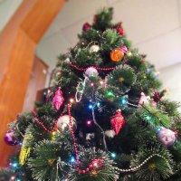 Как хороша новогодняя ёлка! Как нарядилась она – погляди! :: Анна Приходько