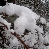 Так хочется снега :: Елена Семигина
