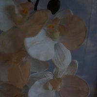 Орхидеи ... :: Алёна Савина