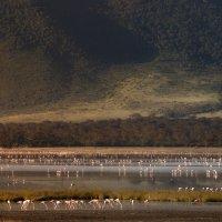 """Страна, где много-много диких ... фламинго""...Танзания! :: Александр Вивчарик"