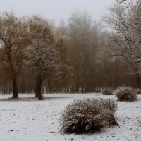 Туман.Ёжик на прогулке. :: Владимир Гришин