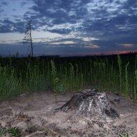 Лес после пожара-4 :: Павел Попов