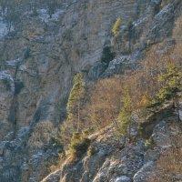 На склоне Чегемского ущелья. :: Александр Яценко