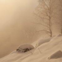 Зимняя вуаль.. :: Марина Фомина.
