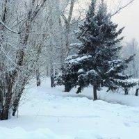 В городском парке. Холодно. :: Наталья Тимофеева