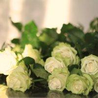 Розы :: ninell nikitina