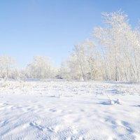 Мороз и солнце.. :: Владимир