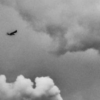 Птица в небесах :: Ярослав Адамов