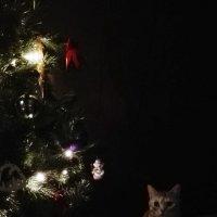Сторожевая кошка у ёлки :)) :: Ирина Ермолаева