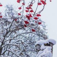 После снегопада... :: Юрий Стародубцев