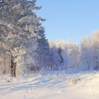 ...И засыпает белым снегом...И, спутав лёгкие следы,стирает грань земли и неба... :: Елена Ярова