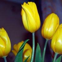 Тюльпаны :: Алла ZALLA